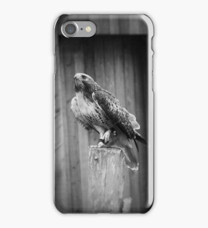 Falcon, Bird of Prey iPhone Case/Skin