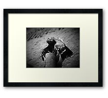 Eagle, Bird of Prey Framed Print