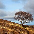 Hillside tree by Dave Hare