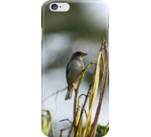 Tanager on a Reed iPhone Case/Skin