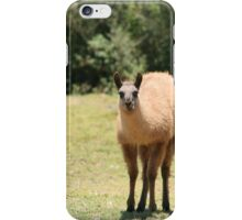 Young Llama Chewing iPhone Case/Skin