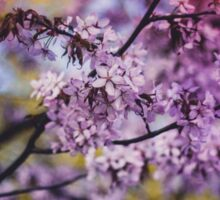 Purple Spring Blossoms - Photograph Sticker