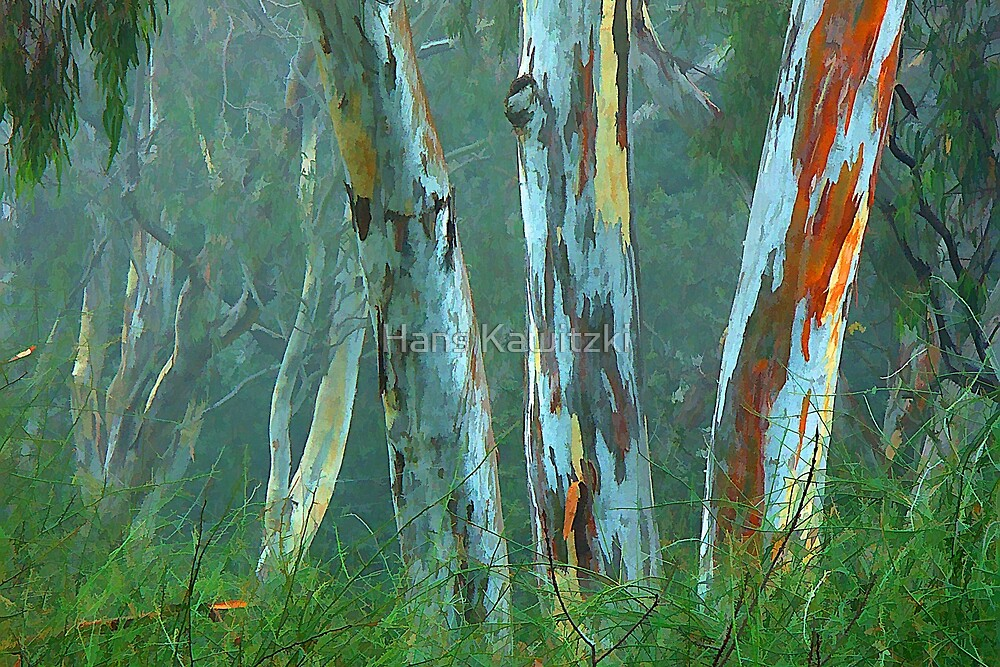 Gum Trees in Fog by Hans Kawitzki