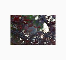 Female cardinal in dogwood tree Unisex T-Shirt