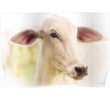 High key portrait of a cow Poster