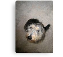 Cute dog looking up Canvas Print