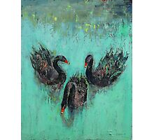 Black Swans Photographic Print