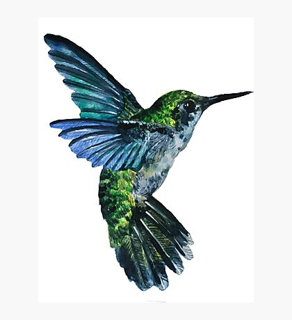 Nature Hummingbird Photographic Print