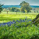 Bluebell Corner by vivsworld