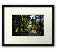Path through a forest Framed Print