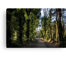 Path through a forest Canvas Print