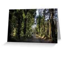 Path through a forest Greeting Card
