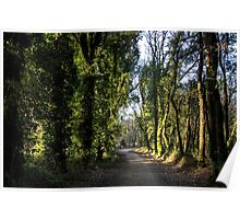 Path through a forest Poster