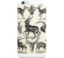 Historical nature iPhone Case/Skin