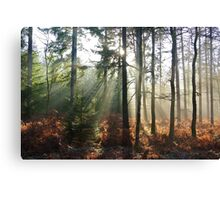 Winter Forest With the Sun through the Trees Canvas Print