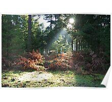 Sunlight beam Poster