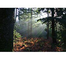Beam of sunlight Photographic Print