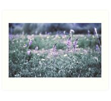 Flower meadow in vintage look Art Print
