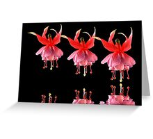 Dancing Fuchsias Greeting Card