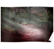 Magical forest scene Poster