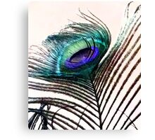 Coloured Feather Canvas Print
