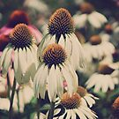 Luv the Cones by KatMagic Photography
