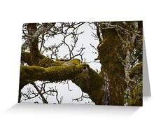 Mossy Limbs  Greeting Card