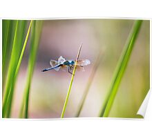 Dragonfly by Pond #1  Poster