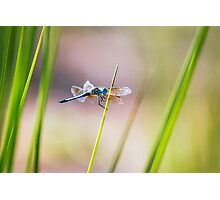 Dragonfly by Pond #1  Photographic Print