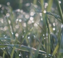 Grass Shining with Raindrops Sticker