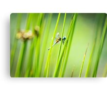 Dragonfly by Pond #2  Canvas Print