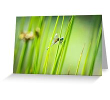 Dragonfly by Pond #2  Greeting Card