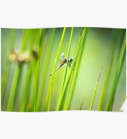 Dragonfly by Pond #2  Poster