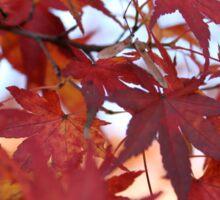 Koku Koen Autumn #2 Sticker