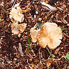 Funghi - after the rains  by Margaret Morgan (Watkins)