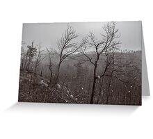 Wintry Desolation Greeting Card
