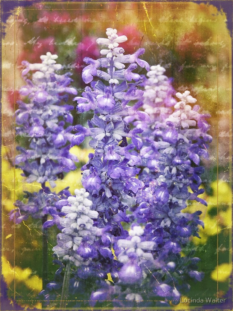 Lavender Bloom by Lucinda Walter