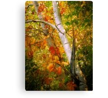 Turning Leaves Canvas Print