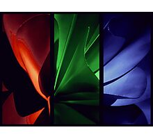 Red   Green   Blue Photographic Print