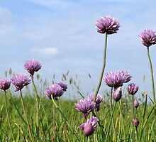 Chives reach the sky by ienemien