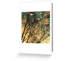 Park Life Greeting Card