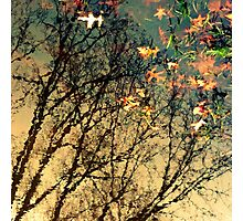 Park Life Photographic Print