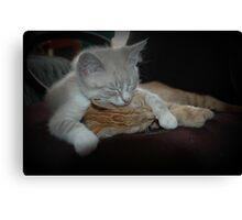 Cuddling kittens Canvas Print
