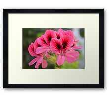 Natural Framed Print