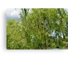 Trees in the park. Canvas Print