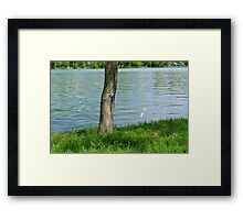 Tree trunk by the river. Framed Print