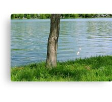 Tree trunk by the river. Canvas Print