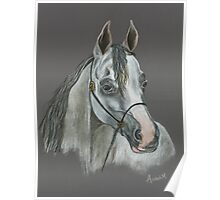 Arabian Horse Drawing / Painting by Anthea M Poster
