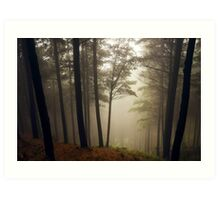 Kingsland Forest - Tasman - New Zealand Art Print