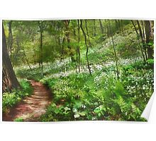 Trilliums in Bloom Poster